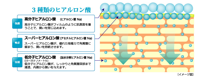 三種類のヒアルロン酸 「保湿」高分子ヒアルロン酸(ヒアルロン酸Na) 高分子ヒアルロン酸がフィルムのように肌表面を覆うことで、潤いを閉じ込めます. 「吸着」スーパーヒアルロン酸(アセチルヒアルロン酸 Na) スーパーヒアルロン酸が、優れた吸着力で角質層に止まり、潤いを持続させます。 「浸透」低分子ヒアルロン酸(加水分解ヒアルロン酸 Na) 低分子ヒアルロン酸が、しっかりと角質層深部まで浸透、内側から潤いを与えます。 [イメージ図]  | 天然ナノセラミドやEGFを配合した化粧品モイストゲルプラス
